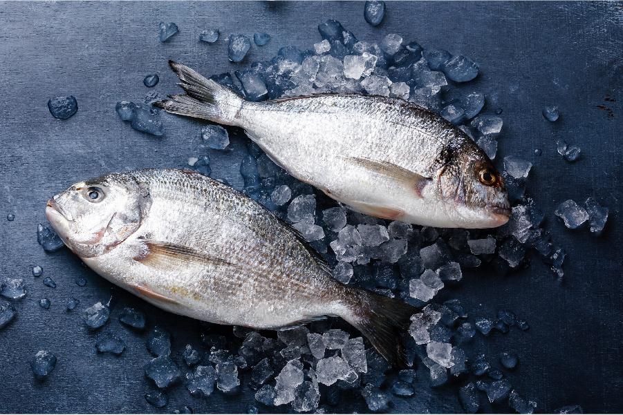 Il Pesce Piu Buono Scopri La Selezione Ittico Nazionale Di Madia